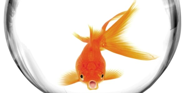 An Expedia take on tackling the attention span of a goldfish